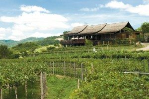 siam winery